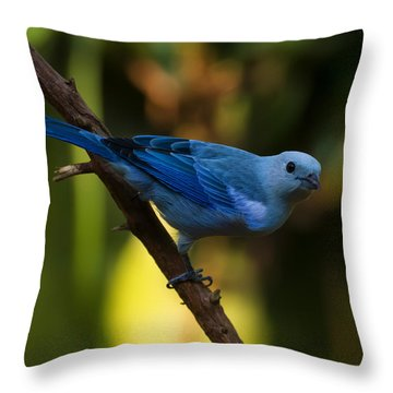 Blue Grey Tanager Throw Pillow