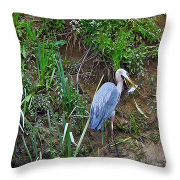 Blue Heron Throw Pillow by Brian Williamson