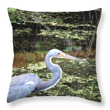 Blue Heron Close Up Throw Pillow by Beth Williams
