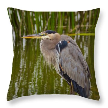 Blue Heron Throw Pillow by Duncan Selby
