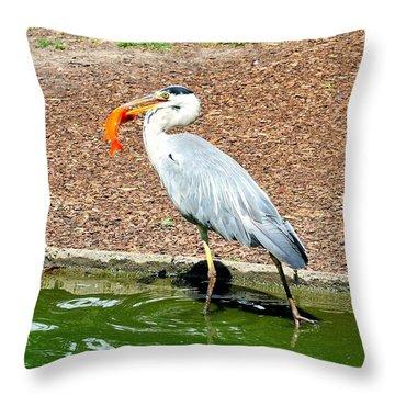 Throw Pillow featuring the photograph Blue Heron Feeding by Joe  Ng