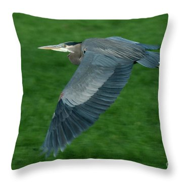 Throw Pillow featuring the photograph Blue Heron by Rod Wiens