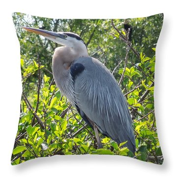 Throw Pillow featuring the photograph Blue Heron by Ron Davidson