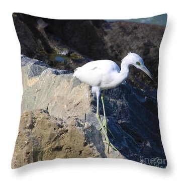 Throw Pillow featuring the photograph Blue Heron Squared by Chris Thomas