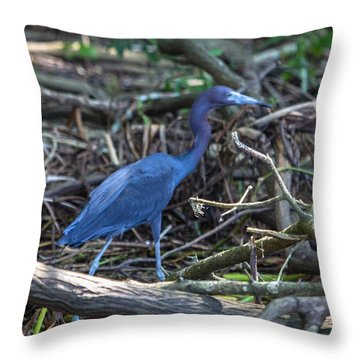 Throw Pillow featuring the photograph Little Blue Heron On The Banks Of An Atchafalya Bayou by Gregory Daley  PPSA