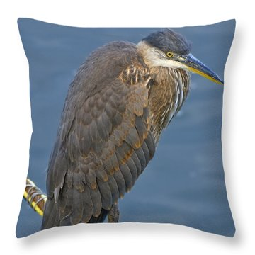 Throw Pillow featuring the photograph Blue Herron by Jim Thompson