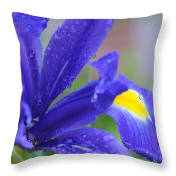 Throw Pillow featuring the photograph Blue Iris by Haleh Mahbod