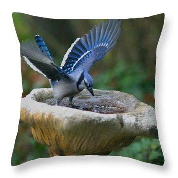 Blue Jay Bath Throw Pillow