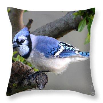 Blue Jay Beauty Throw Pillow by Nava Thompson