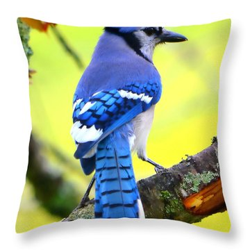 Throw Pillow featuring the photograph Blue Jay by Deena Stoddard