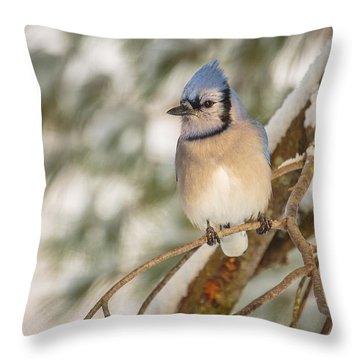 Blue Jay Throw Pillow by Everet Regal