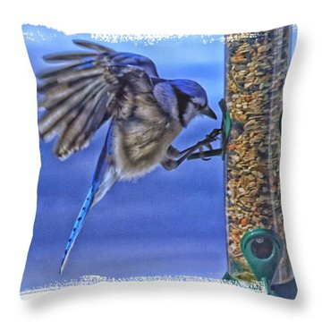 Throw Pillow featuring the photograph Blue Jay Hanging On by Constantine Gregory