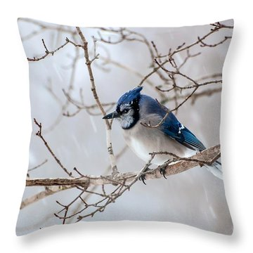 Blue Jay In Blowing Snow Throw Pillow by Debbie Green