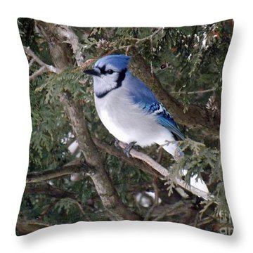 Throw Pillow featuring the photograph Blue Jay In The Cedars by Brenda Brown