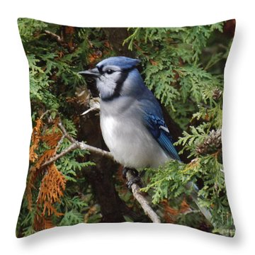 Throw Pillow featuring the photograph Blue Jay In Cedar Tree 2 by Brenda Brown