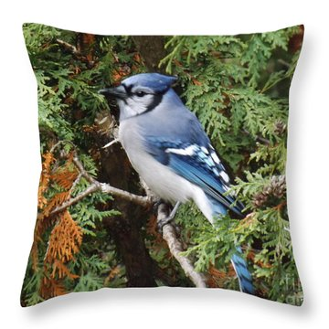 Throw Pillow featuring the photograph Blue Jay In Cedar Tree by Brenda Brown