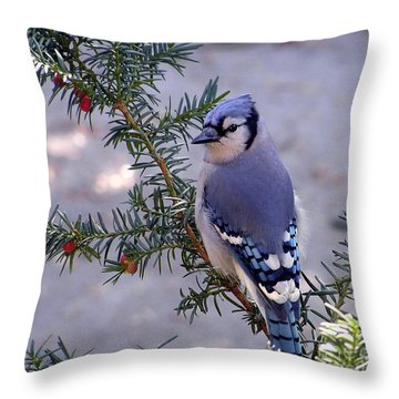 Blue Jay - Morning Visitor  Throw Pillow by Susan  Dimitrakopoulos