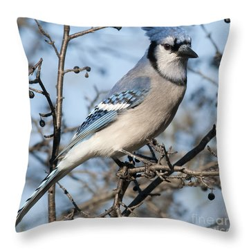 Blue Jay.. Throw Pillow by Nina Stavlund