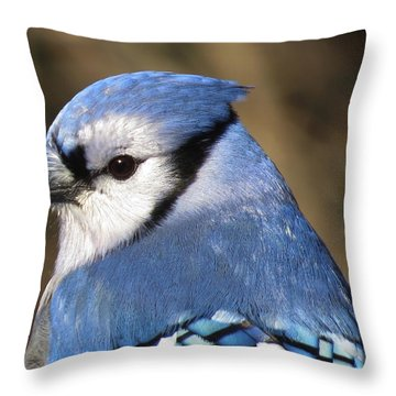 Blue Jay Profile Throw Pillow by MTBobbins Photography