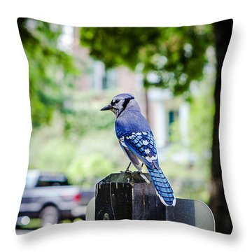 Throw Pillow featuring the photograph Blue Jay by Sennie Pierson