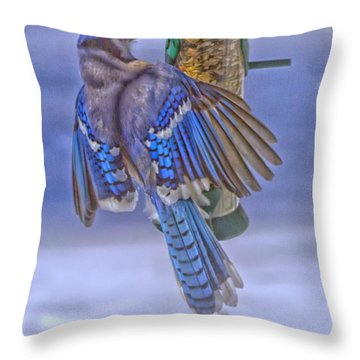 Blue Jay Swinging Throw Pillow by Constantine Gregory