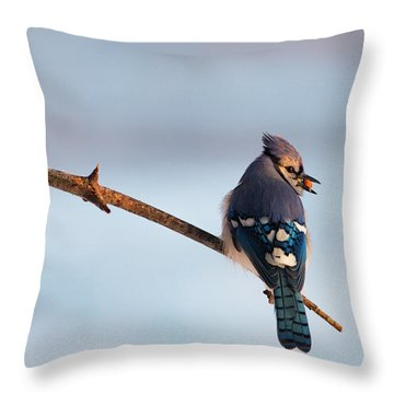 Blue Jay With Nuts Throw Pillow