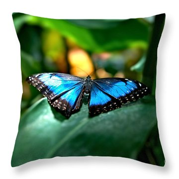 Blue Lit Butterfly Throw Pillow