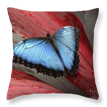Blue Morpho 2 Throw Pillow