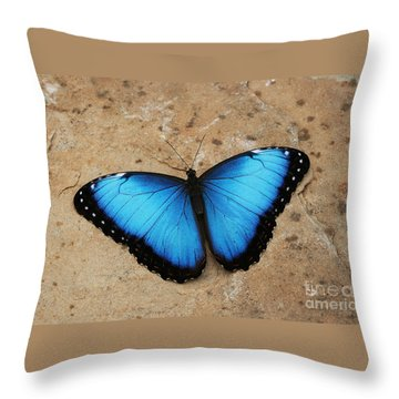 Blue Morpho #2 Throw Pillow by Judy Whitton