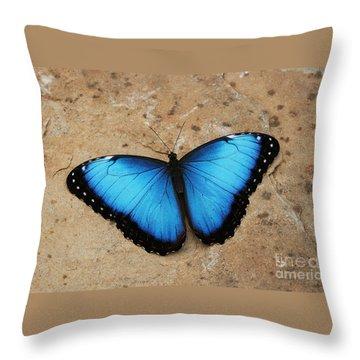 Blue Morpho #2 Throw Pillow