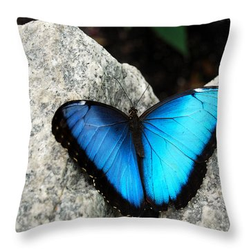 Blue Morpho Butterfly Throw Pillow by Eva Kaufman