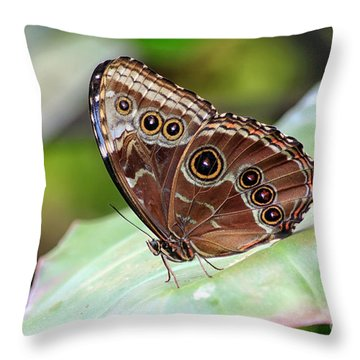 Blue Morpho Butterfly Throw Pillow by Teresa Zieba