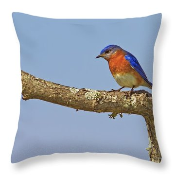 Blue On Blue Throw Pillow by Gary Holmes