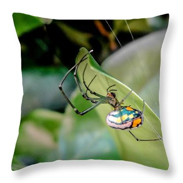 Throw Pillow featuring the photograph Blue Orbweaver by TK Goforth