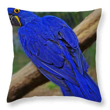 Blue Parrot Throw Pillow by Jack Moskovita