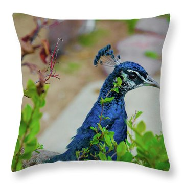 Blue Peacock Green Plants Throw Pillow by Jonah  Anderson