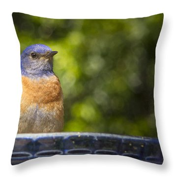 Blue Plate Special Throw Pillow by Jean Noren