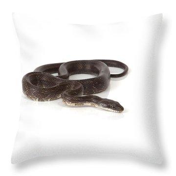 Blue Racer Throw Pillow