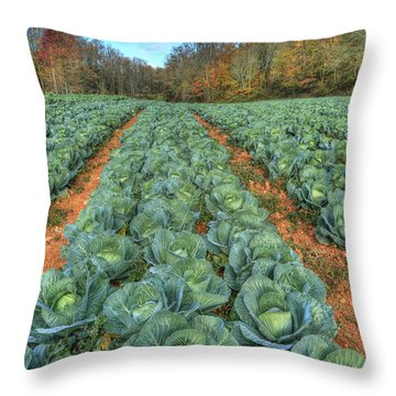 Blue Ridge Cabbage Patch Throw Pillow by Jaki Miller
