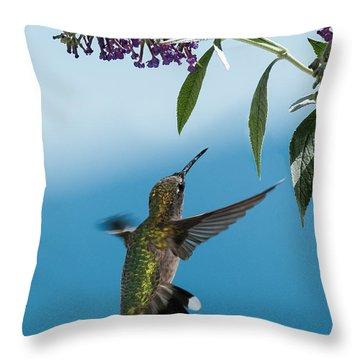 Blue Ridge Hummingbird Throw Pillow