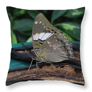 Blue-spotted Charaxes Butterfly Throw Pillow
