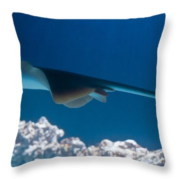Throw Pillow featuring the photograph Blue Spotted Fantail Ray by Eti Reid