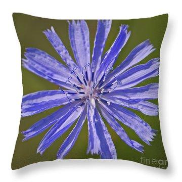 Blue Star... Throw Pillow by Nina Stavlund