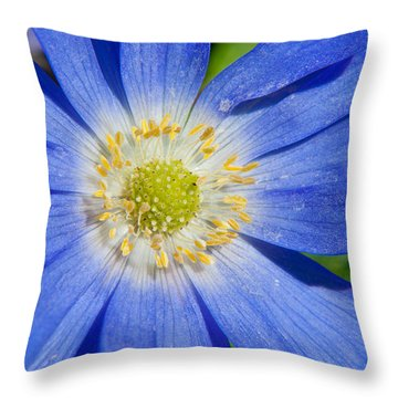 Blue Swan River Daisy Throw Pillow by Tikvah's Hope