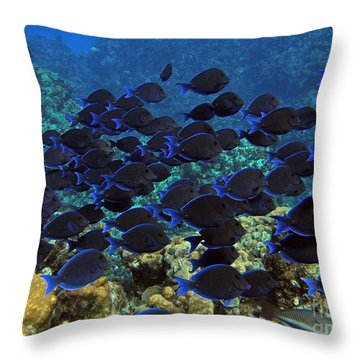 Blue Tangs Throw Pillow by Carey Chen
