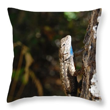 Throw Pillow featuring the photograph Blue Throated Lizard 2 by Debra Thompson