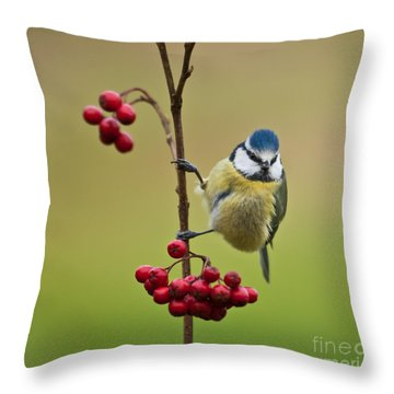 Blue Tit With Hawthorn Berries Throw Pillow