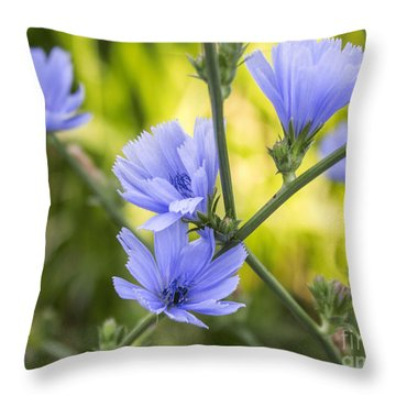 Blue Wildflwer Throw Pillow by Arlene Carmel