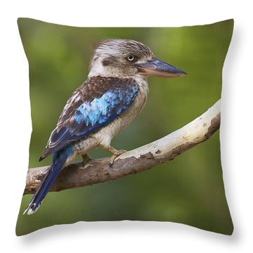 Blue-winged Kookaburra Queensland Throw Pillow