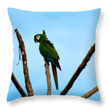 Blue-winged Macaw, Brazil Throw Pillow by Gregory G. Dimijian, M.D.